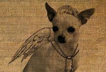 Chihuahua Cuties / by Angela Croissant