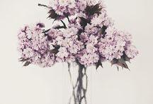 blomma • blad • en miljard