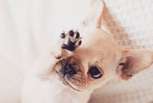 ANIMALS / I have a big heart for animals, treat them well ... please ❤️