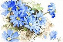 Original watercolor Paintings - flowers / Flowers - Original watercolor paintings by David Platt