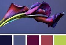 color / color palettes