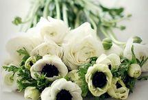 hana はな 花