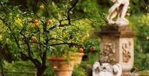Giardini di Firenze / Qui vivo. Firenze è la mia città. Conosco ogni angolo di questi giardini. Desidero condividere tanta bellezza.