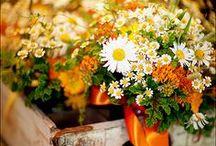 Flowers I Love / by Carmel James