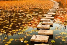 Bridges and pathways / by Katie Wagner