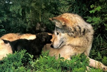 Wolves / by Katie Wagner