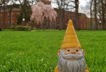 Kevin the Gnome / Kevin is the gnome who lives in the Office of Admissions and likes to show the lighter (and shorter) side of Manchester.