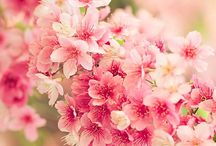 Lente! / by Ina Kusters