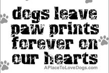 For My Scout / Dog treats recipes, and other dog related snippets, etc. / by Kelly Smith MacDonald