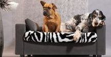 Dog bed / Inspired by a passion, GiusyPop has designed and created sofas that bring perfect comfort to our cat and dog friends allowing you to easily integrate this trendy furniture to your interior:  PLEASURE FOR THE WHOLE FAMILY