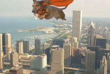 My wonderful ZELINDA / My lovely dachshund