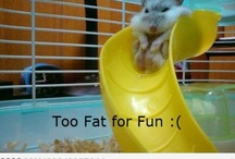Funny / by Katie Liebeknecht
