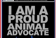 Fighting For Animal Rights