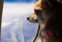 Animals & Pets on Flights / Travel tips designed to help you plan your next flight with your pets.