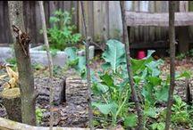 Backyard Farming / gardening tips,