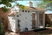 CHICKEN COOP / design