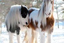 chevaux de classe