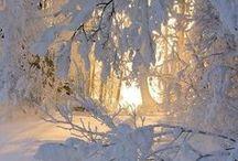 broouuh une forêt magic