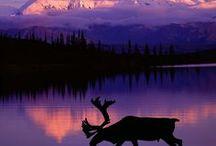 Alaska / Road trips around Alaska.