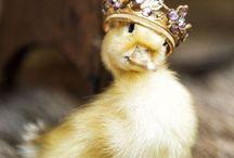Duck / Pins for duck lovers. I LOOOOOVE DUCKS!!!