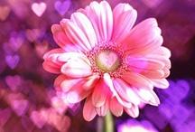 Flowers / by Robin Tigli