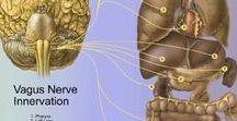 Nervul vag - Vagus Nerve