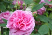 Il libro dei fiori / Alcuni scatti personali su fiori e piante del mio giardino e non solo