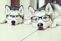 kutya / :)