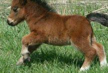 Mini hest
