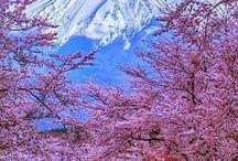 Vakre trær