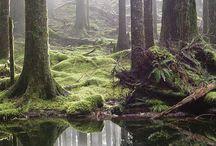Skogs tjern