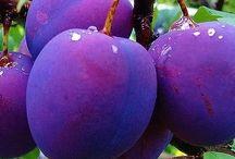 Høstens frukter !