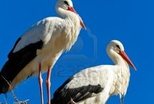Storker.