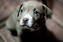❉ Pooch Café...Woof Woof ❉ / collection of puppy and dog images