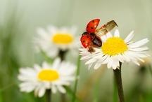 ✽ Flower Power ✽ / Flower Images