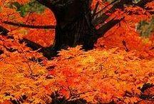 Autumn / by Kathleen Mathena