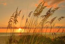 Nature's Beauty / by Pam Scherer