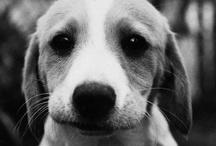 cutest in the animal kingdom II / by Veronica Hunziker