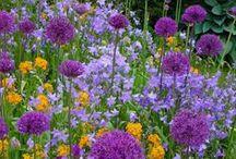 Garden & Water Features / by Kathleen Mathena