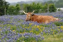Texas / by Kathleen Mathena