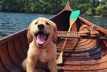 Lake Dogs / Even our furry friends love the lake life! Check out these dogs who are the happiest when they are at the lake, too.