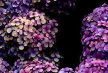 … Purple reign / Purple flower inspiration