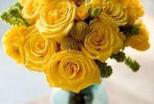 … hello, Yellow!