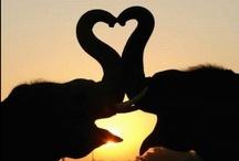 elephant. / by Kim