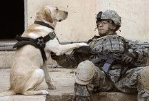 soldiers and dogs.