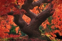 Fall / by Erin L. Schneider