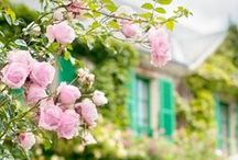 Garden + Flowers  / by A Fanciful Twist