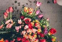 FLORAL / by Avery Holland