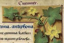 Herbarium / Figures