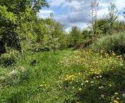 Permakultur I Hauptstadt Garten / Einführung in das Prinzip Permakultur und Inspiration zum Anlegen eines nachhaltigen Gartens, der Erstellung von Kompost und Humus und der Mischkultur von Pflanzen